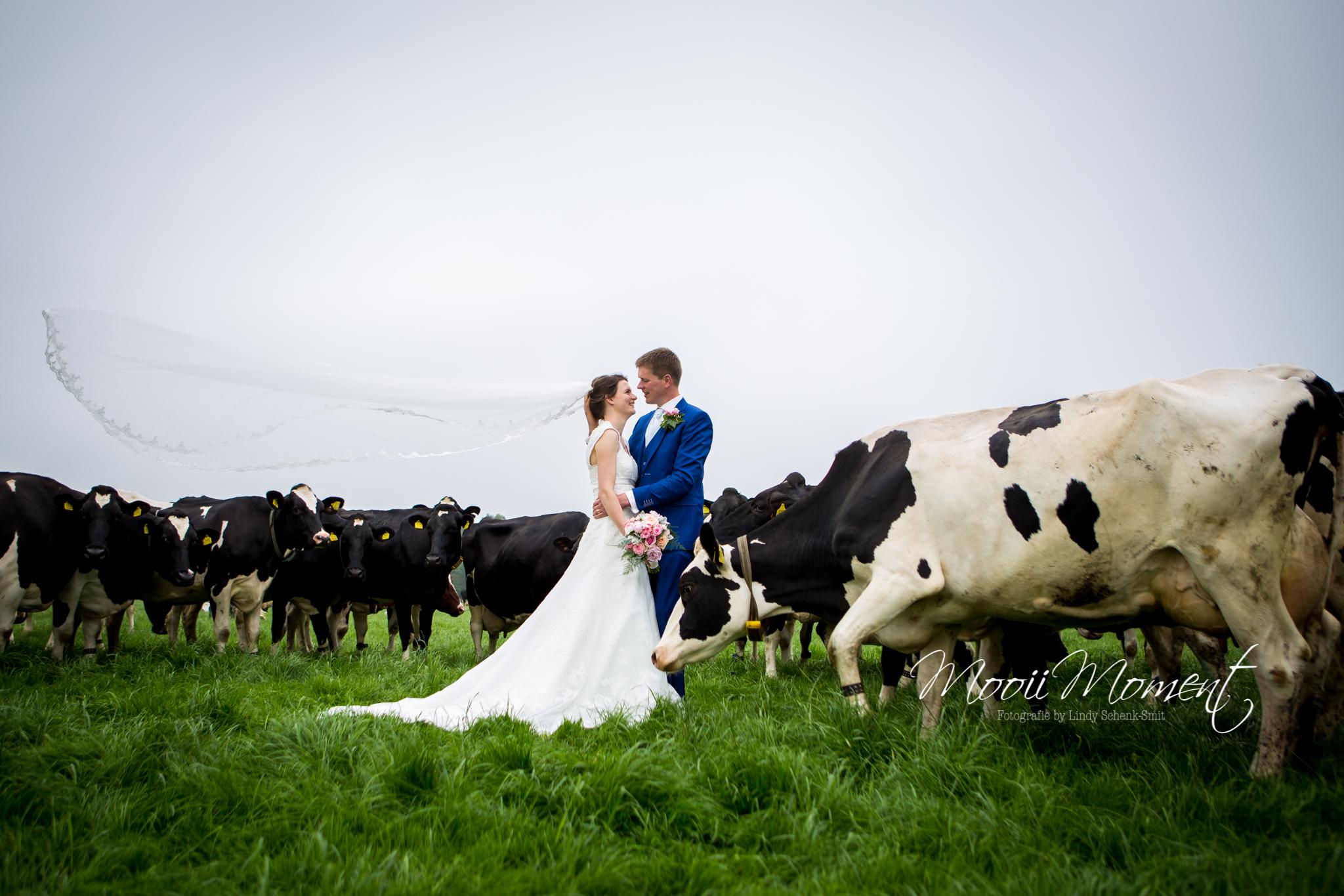 Bruiloft Henk en Fiona op de boerderij